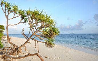 The beach of a local island in Maldives
