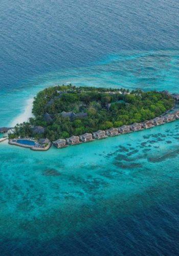 taj coral reef 01